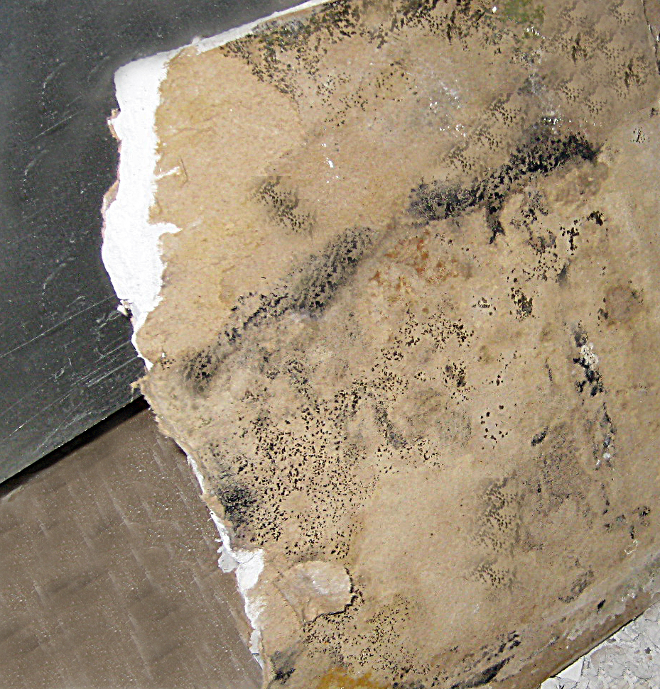 Mold on Drywall