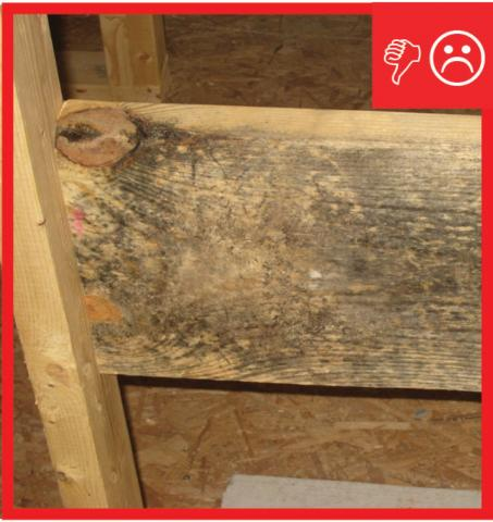 Wrong – Building materials with visible signs of mold have been used