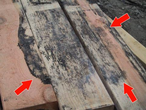 Do not install lumber, plywood, or other building materials that show visible signs of water damage or mold.