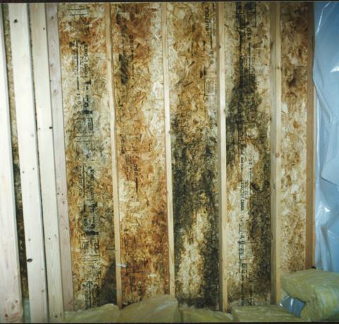 Mold on OSB sheathing