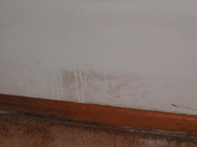 Mold on wall, baseboard, and carpet