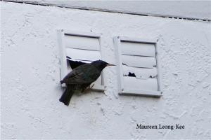 Birds may nest in unprotected vent openings